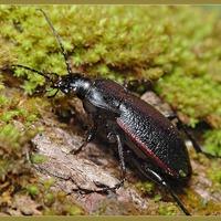 От каких насекомых на даче не стоит избавляться?