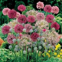Неприхотливые луковичные для дачного цветника