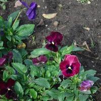 Последние цвты в саду