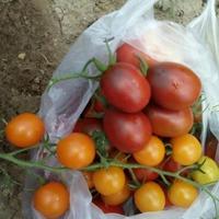 Спасибо, Лето, за щедрый урожай!