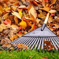 Нужно ли собирать опавшие листья в саду