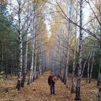 Золотая осень. Прогулка в лес