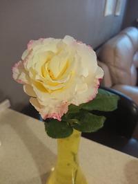 Обрезки от розы. Как лучше начеренковать?