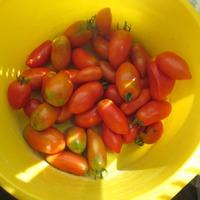 А как вы храните бурые помидоры?