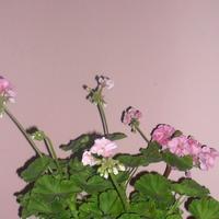 Девочки, нужен совет по выбору комнатных растений!!!