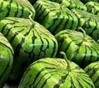 Технология выращивания арбузов необычной формы