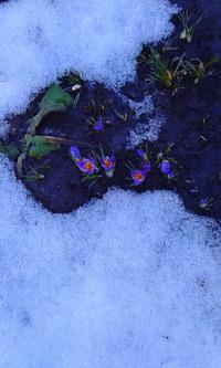 И вот она, долгожданная весна!