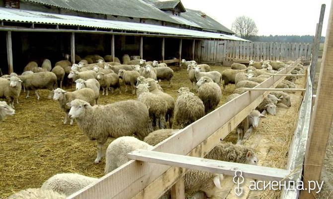 Основные нюансы использования овечьего навоза