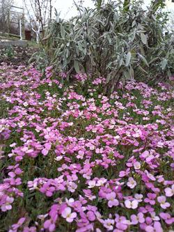 Первоцветы в выходной 14.04.2019