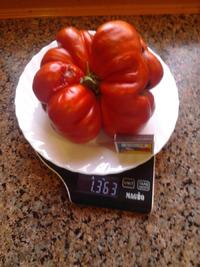Чудо помидор-Томатомозг