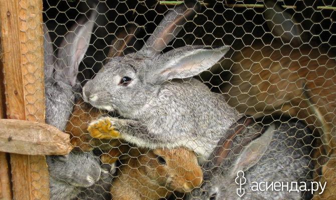 Стоит ли использовать на участке кроличий навоз?