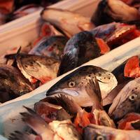 Использование рыбных отходов в качестве удобрения