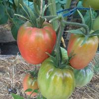 Что с помидорами?