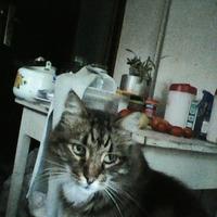 Фотосессия кота Коши.