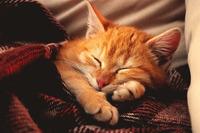 Кошки и наше здоровье