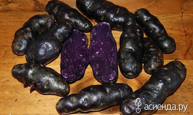 А вы знакомы с черным картофелем?