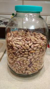 Выращивание фасоли обыкновенной