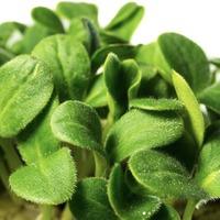 Семена для проращивания. Как вырастить здоровые растения