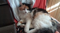 Мои любимые кошки.