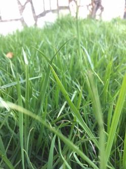 Записки грунтоведа: помогут определить качество и спелость почвы?