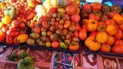 Сорта томатов 2018 года часть 1