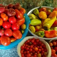 Сорта томатов 2018 года часть 3