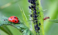 Защита растений биологическими методами. Продолжение