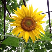 Мой сад - 16.07.19г.