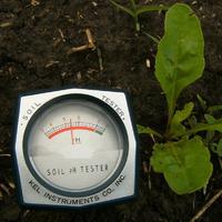 Как растения помогут определить кислотность почвы?