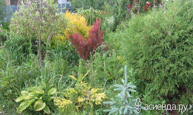 Живые зонтики в саду