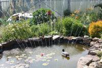 Заселение дачного пруда