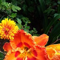 Цветущая радость