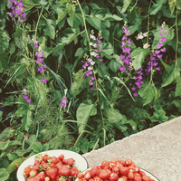 Мой сад - 03.06.19