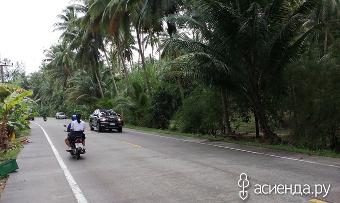 Три пальмы острова Панган