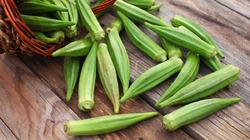 Как вырастить бамию из семян?