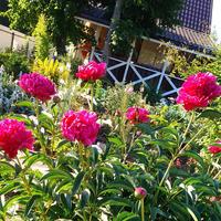 Благоухание цветов