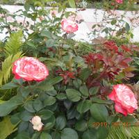 Летний зной и красота цветов-страдальцев