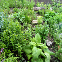 Аромат в саду