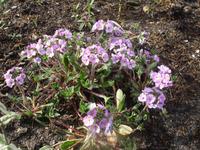 Цветок с пробивным характером
