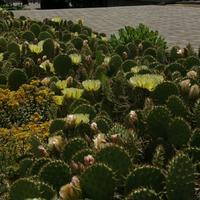 Наш Донецкий ботанический сад.