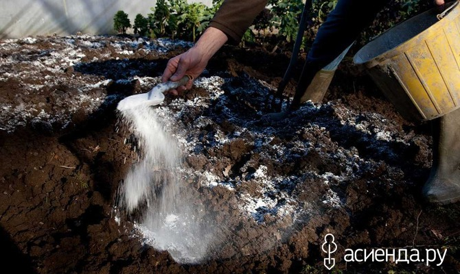 Зачем нужно известковать почву?