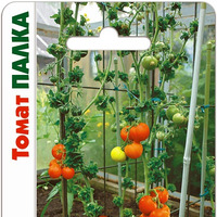 Выращиваю томаты сорта Палка