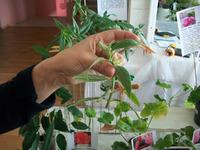 Научилась делать видео из фото растений.