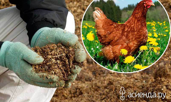 Куриный помет - отличное удобрение для огорода!