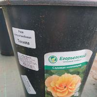 Помогите подобрать сорт розы!!!
