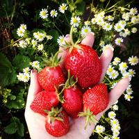 Мой сад - 20.05.19