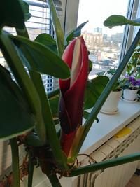 Какой это цветок?