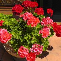 Комнатные растения для улучшения воздуха
