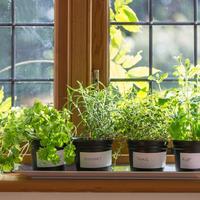 Вторая жизнь дачных растений