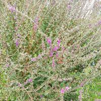 SOS!!! Помогите узнать название растения!!!